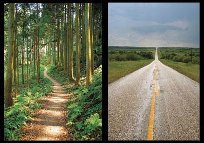 Trail Runners vs. Road Runners