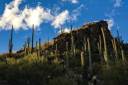 Top Trail Towns: Tucson, Arizona