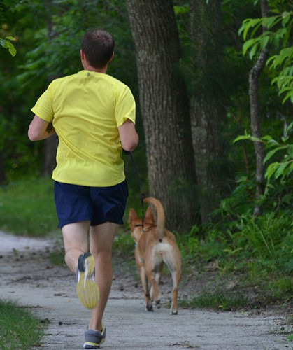 Top 10 Dog Breeds for Trail Runners