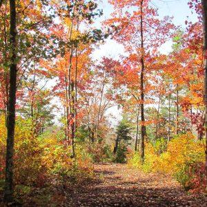 Six Leaf-Peeping Runs in the Southeast