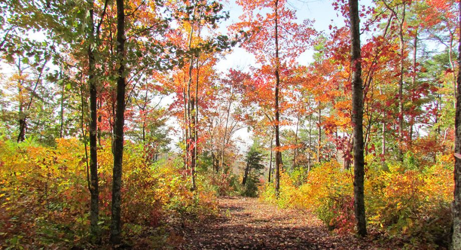 Six Leaf-Peeping Runs in the Southeast